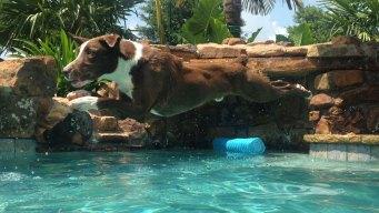 Dog Days of Summer - June 29, 2016