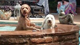 More Dog Days of Summer - July 6, 2016