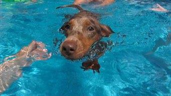 Dog Days of Summer - July 5, 2016