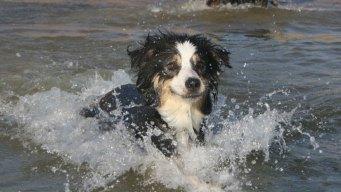 Dog Days of Summer - August 29, 2013