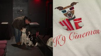 Movie Theater for Dogs, Owners Opens in Plano
