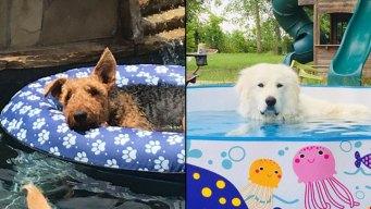 Dog Days of Summer - June 26, 2019