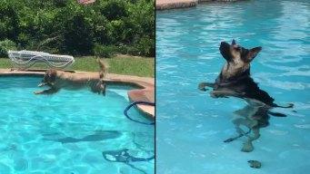 Dog Days of Summer - Labor Day