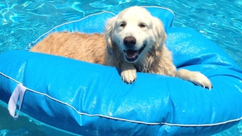 Dog Days of Summer - August 15, 2012
