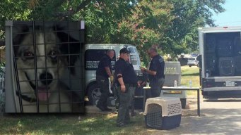Dead Animals Found in Bags at Rescuer's Home