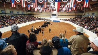 Stock Show Sees One Million Visitors