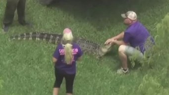 7-Foot Gator Found Behind Texas Home
