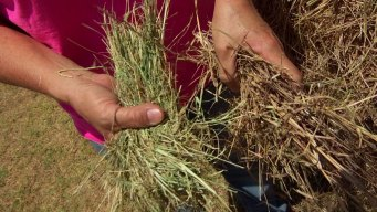Animal Charity Scrambles to Find Hay in Drought