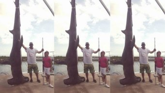 Fisherman Hauls in Texas Record 1,033-Pound Hammerhead Shark