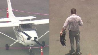 Bird Strike Forces Emergency Landing in Texas