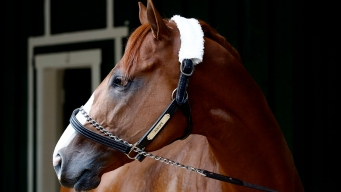 Justify Can Win Triple Crown: Hall of Fame Jockey Mike Smith