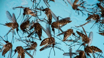 Texas Awarded $5M for Zika Preparedness Campaign