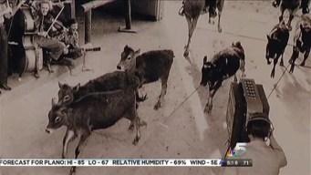 Animals In NBC 5's Studios!