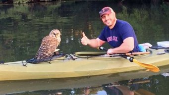 Kayaker Snags Owl While Fishing