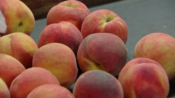 Why Parker County Peach Festival is the Best