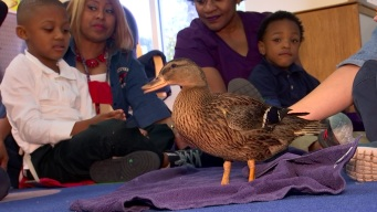 Pete the Therapy Duck Teaching Lessons of Kindness at FWISD