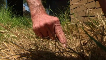 Fungus Takes Root in North Texas Lawns