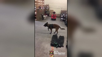 K9 Meets Snow Boots, Isn't Into Them