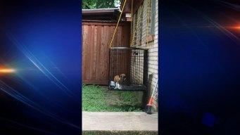 Haltom City Puppy Found in Suspended Cage