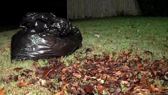 NWF Recommends Not Raking Leaves