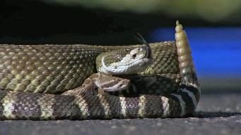 Abilene Toddler's Snake Bite Prompts Concerns