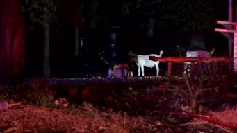 Horses Killed After Barn Fire in Dallas