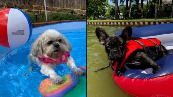Dog Days of Summer - Rocco and Willow