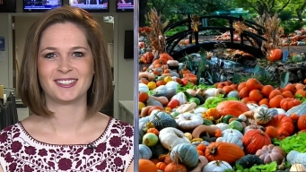 Sarah's Weekend Picks: Arboretum Pumpkins, Food Festivals