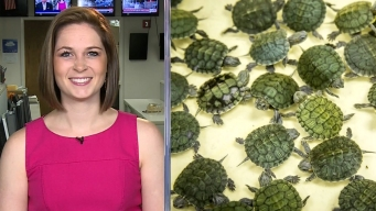 Sarah's Weekend Picks: Repticon, Rodeo, Eclipse
