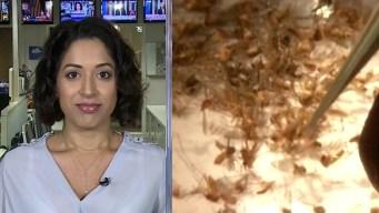 The DMN's Dr. Seema Yasmin - Zika Vaccine