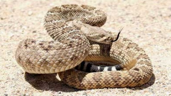 Rattlesnakes Like New North Austin State Office Buildings