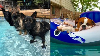 Dog Days of Summer -  Cool Canines