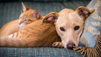 Clear the Shelters: Find a Participating Shelter Near You
