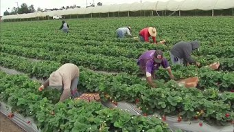 Agriculture Industry Struggles to Fill Thousands of Jobs