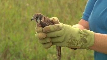 Rehabilitated Birds Fly High Again