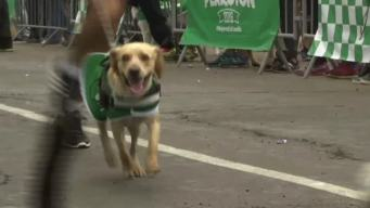People And Their Pups Race In Peru