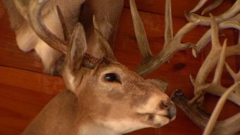 Deer Hunters Take Aim At Supply Stores