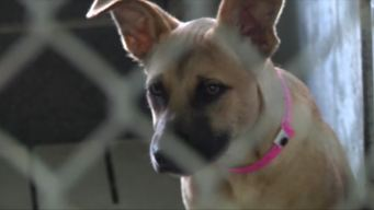 Stray Dog Population Problem in South Texas