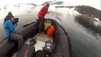 Scientists Attach Cameras to Whales