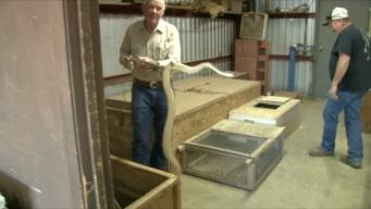 Texas Snake Hunter Going Out of Business