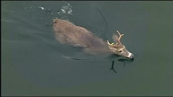 Emergency Crews Rescue Deer From Reservoir