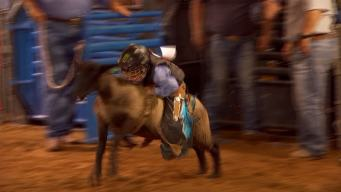 North Texas Kids Go Mutton Busting