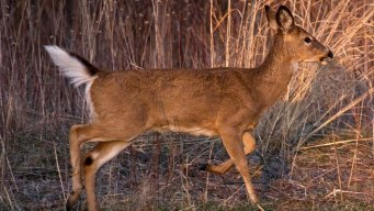 Texas Expands CWD Containment Zone