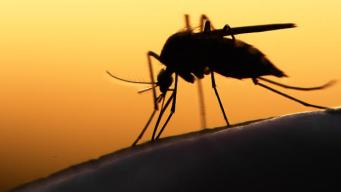 Border Counties Prepare For Local Zika Transmission