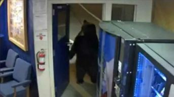 Bear Opens Door, Strolls Into Calif. Highway Patrol Facility