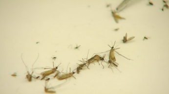 Mosquito Tests Positive for West Nile in Mesquite