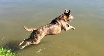 More Dog Days of Summer - June 13, 2016