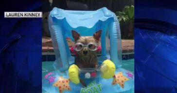 Dog Days of Summer: Friday, June 15