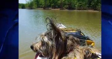 Dog Days of Summer - August 6, 2018