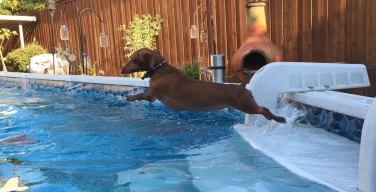 Dog Days of Summer - June 15, 2016